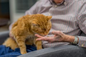 A cat smelling a man's hand.