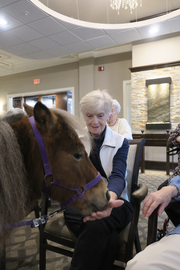 Elderly woman feeds a miniature horse.