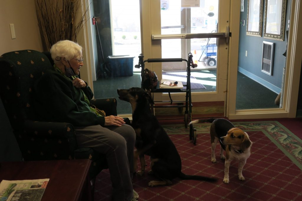 An elderly woman pulls her mask down to play with two sweet dogs for pet therapy.